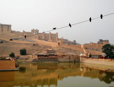 Джайпур – розовый город счастливых животных
