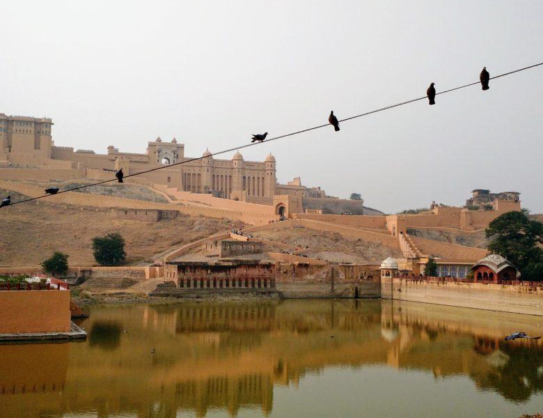 Джайпур — розовый город счастливых животных