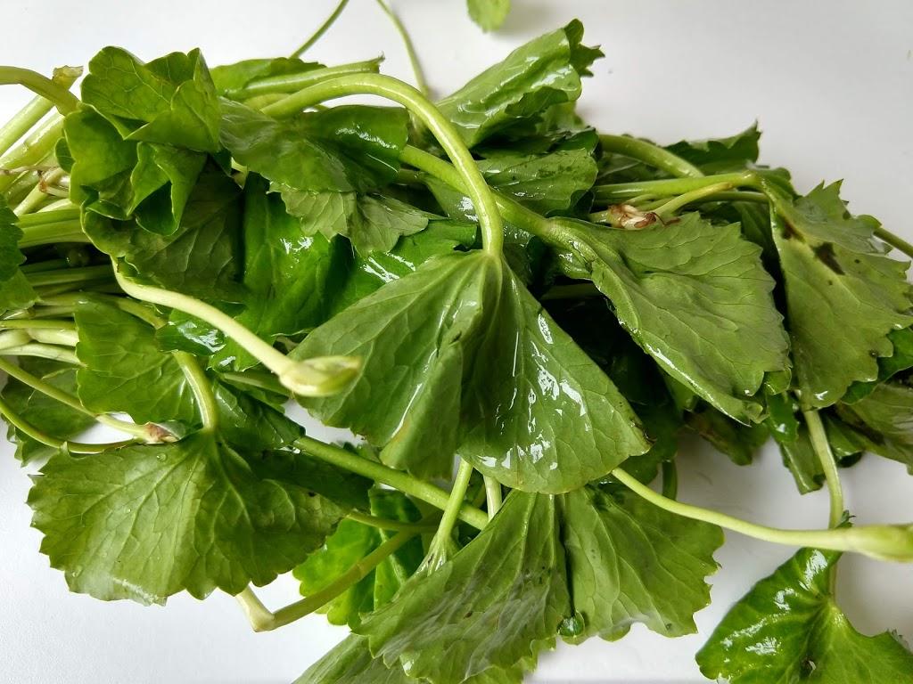 Обед по-тайски: трава Бо-бо и другие деликатесы