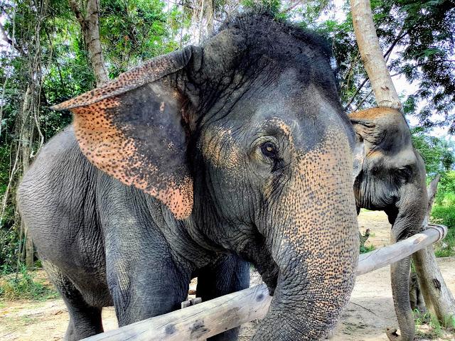 В гостях у слонов